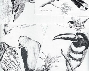 10 Bird Clip Art Snippets from Nature Tour Catalogue for ATCs, Collage, Scrapbooking, Paper Arts and MORE PSS 2945