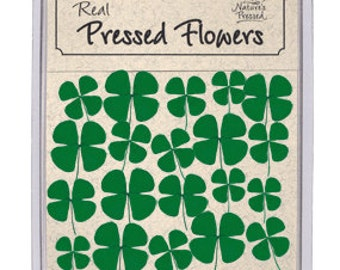 Four-Leaf Clover 24 Count