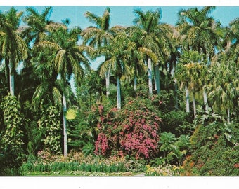 Vintage Florida Chrome Postcard St Petersburg Sunken Gardens Royal Palms Flowers USED