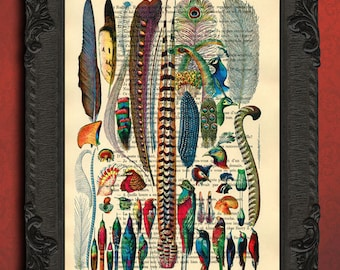 Bird feathers collection feather art print antique illustration on upcycled dictionary page birds altered book page print plume