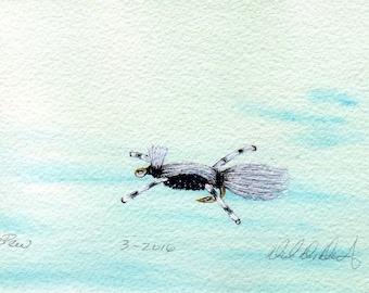 Fishing and Fly Tying Art - Original Art - Watercolor - Skunk - Made in Michigan - Michigan Artist - Fly Fishing - Black Frame - Gift - Him