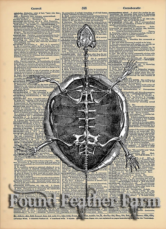 """Vintage Antique Dictionary Page with Antique Print """"Turtle Shell"""""""