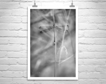 Dragonfly Art, Damselfly Picture, Black and White Nature Photography, Dragonfly Picture, Damselfly Art, Insect Art, Dragonfly Gift