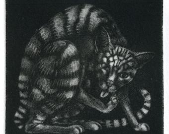 "Mezzotint - ""Stripy Cat Washing"" - original print by Nancy Farmer, unframed."