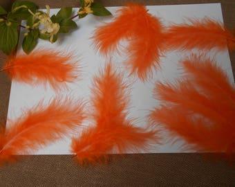 10 feathers - orange d ' about 11cm