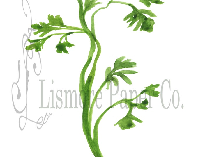 Instant Download, Botanical, Parsley, Herb Printable Art Instant Wall Art, Graphic, Kitchen Art, Craft, Digital Download, Botanical Wall Art