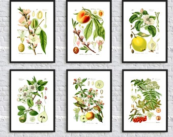 Fruit Wall Art Print - Vegetable Poster - Kitchen Wall Art Decor - Fruit Tree Poster - set of 6