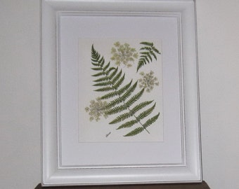 Spring ferns and Queen Annes Lace in 11x14 white frame