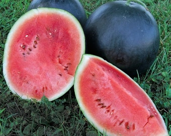 Watermelon Blacktail Mountain Heirloom Seeds Non-GMO Naturally Grown Open Pollinated Gardening