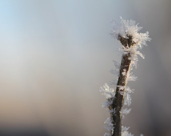 Beautiful Ice Crystal