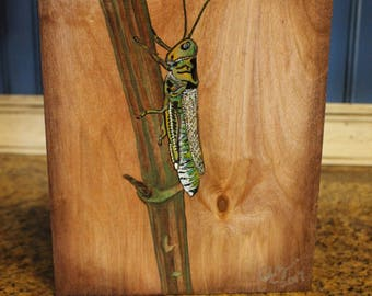 Out of Stock...SALE Green Grasshopper on Wood