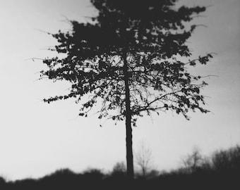Nature Photography - Surreal Black and White Photo Nature Minimalism Tree Dark Print Goth Halloween Art Home Decor