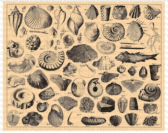 Shell Digital Download Collage Sheet E