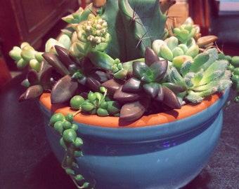 Succulent garden arrangement!