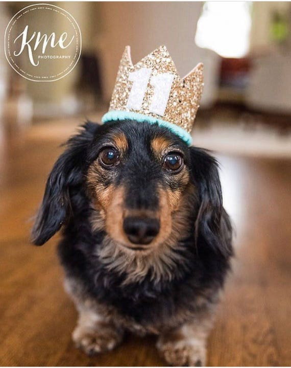 Dog Birthday Crown Hat    Animal Party Hat    Cat Kitty Puppy Pig Birthday Crown Hat    Add Any Number
