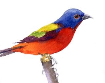 Bird Watercolor Print- Valentine Gift for Birder- Bird Watcher Gift- Painted Bunting Bird Print #2- Painted Bunting Watercolor