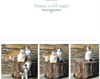 Cats at the Monastery  Panachrantou, Andros Greece