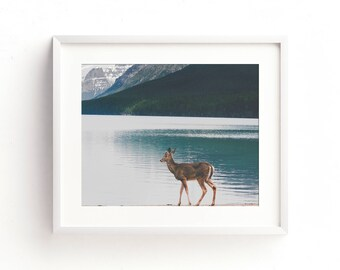 "landscape photography, glacier national park, bowman lake, deer, wildlife, wilderness, large art, large wall art - ""Bowman Lake Visitor"""