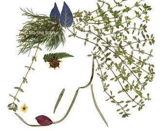 PRANCE - Botanical greeting card of a horse - Pressed flower art - Art print notecard made of pressed flowers & herbs - Equine