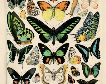 Butterfly Chart Print - Vintage Art Reproduction Poster of Insects. Variety of Butterflies Educational Chart Diagram Poster. CP209