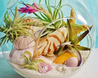 """Sunset Beach Terrarium Kit ~ 7"""" Air Plant Terrarium Kit ~ Coastal Living Beach Decor ~ Nautilus Shell ~ Sea Urchins ~ Starfish ~ Gift"""
