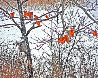 Museum Quality - Winter Birdhouse 5x7 Fine Art Photography Rustic  Nature Woodland Print