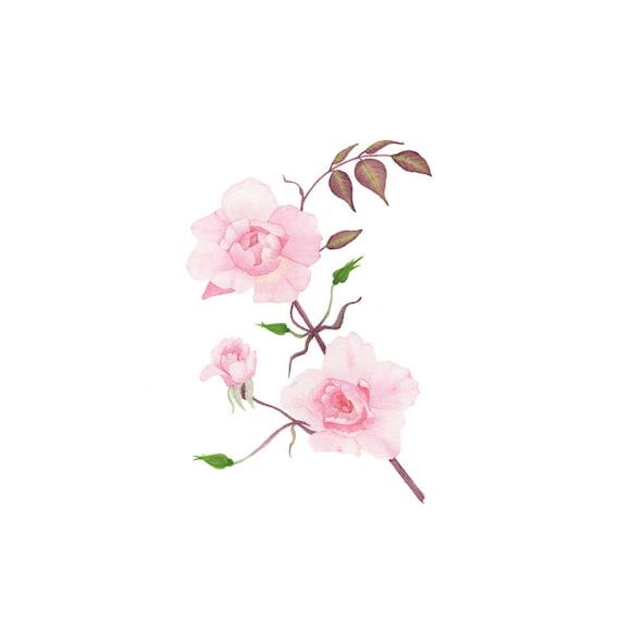 original gem lde aquarell rosen rosa romantische englische. Black Bedroom Furniture Sets. Home Design Ideas