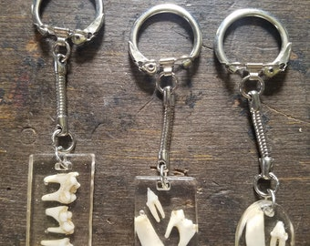 Real Racoon tooth keychains