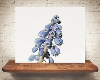Grape Hyacinth Flower Photograph - Fine Art Print - Color Photo - Wall Art - Floral Decor - Wall Decor - Pictures of Flowers - Blue