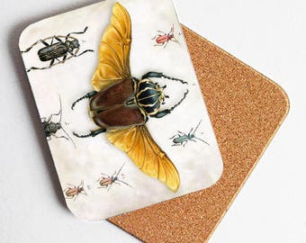 The beetle collection coaster