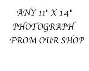 "An 11"" x 14"" Professional Print of Any Photograph in Our Shop"