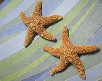 Mini Orange Sugar Starfish - Mini Starfish - Orange Sea Stars - Sugar Stars