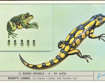 Reptiles  Victorian trade from 1950