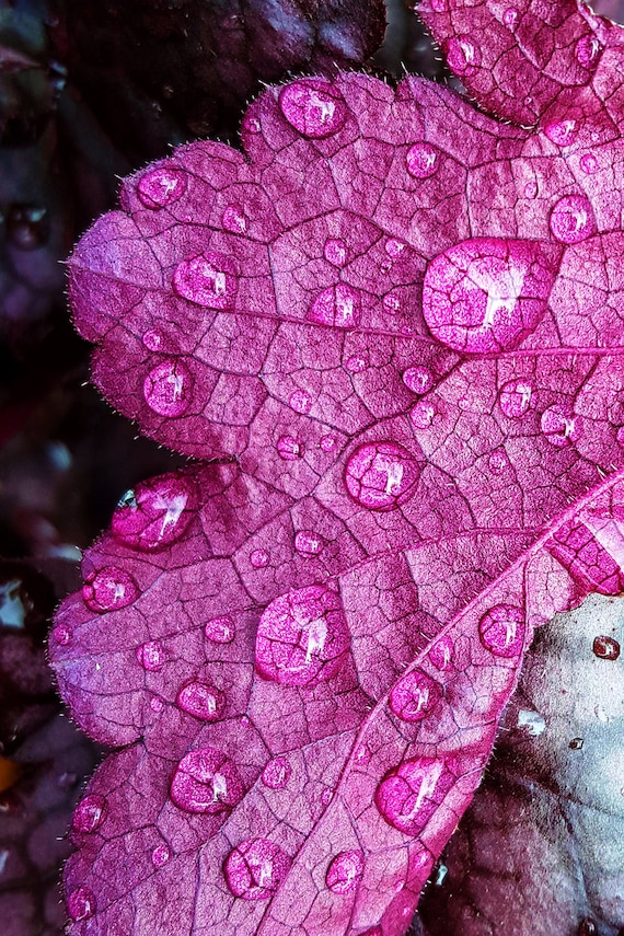 """Metal Art Print """"Purple Rain"""", Plant Photography Printed on a Brushed Aluminum Box, 16x24x1, Special Order Only"""