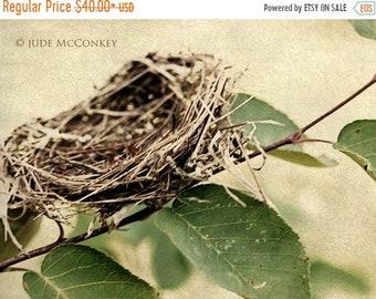 25% Memorial Day Sale bird nest Spring leaves tree fine art photography wall decor home decor
