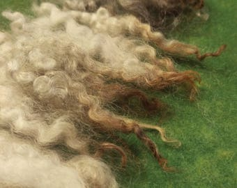 Natural white wool curls and locks/ wool roving, BFLx Cunforest breed, carded wool fleece