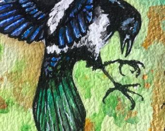 Magpie, Corvid in flight