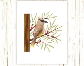 Cedar Waxwing Print -- bird art -- bird art 52 birds stephanie fizer coleman illustration red yellow brown