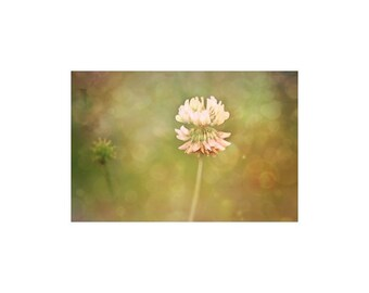 Clover Late Summer Photography Sweet Clover Photo  Flower Photography Clover Art Print Bokeh Photography Earth Tones Nature Photo Woodland