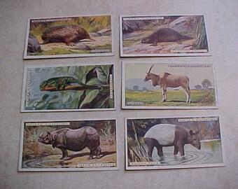 6 Cigarette Animal Cards