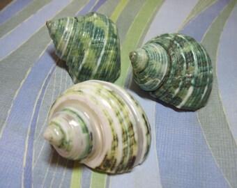 Mini Jade Turbo Shell 965- Polished