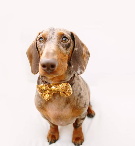 Dog Bow Tie    Cat Neck Tie    Bowtie for Kitty    Pet Bow Tie    Cat Costume
