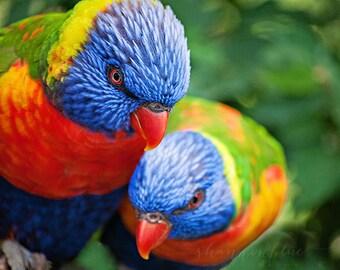 bird photography, nature photography, lorikeet, lovebird, rainbow, love, bird, blue, red, green / love birds / 8x10 fine art photograph