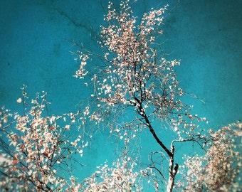 Tree photo, spring art, summer decor, nature decor, country decor, teal decor, turquiose, silver birch