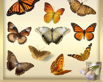 10 Autumn Clip Art Vol. 1 - Butterfly Overlays -  Photoshop Overlays - Butterfly Overlay -  Butterflies -  Instant Download - png files
