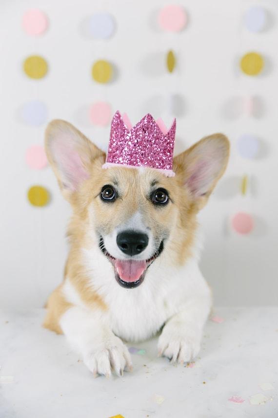 Pet Birthday Crown    Animal Party Prop    Birthday Party Photo Prop    Dog Cat Pig Birthday Party Hat Crown