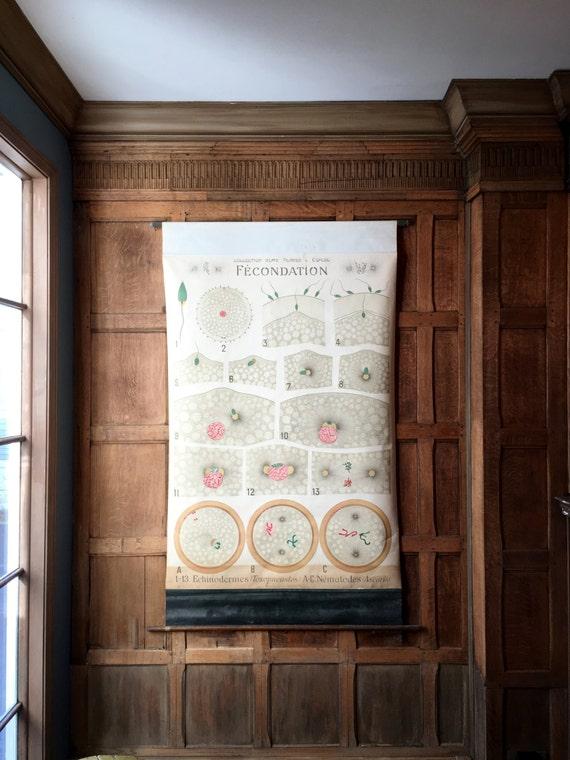 Antique Pull Down Chart, Fecondation Fertilization Biological Chart, Remy Perrier & Cepede School Chart, Scientific Illustration