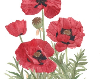 Red Poppies Garden Watercolor x7 Reproduction