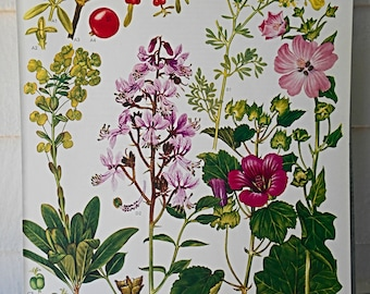 """Botanical Print 9X12"""" Original Book Page (Plate #35) from """"Wild Flowers of the World"""""""