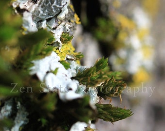 Tree Lichen Nature Print Biology Photo Print Unframed Photography Print Framed Print Canvas Print Green and White Wall Art Home Decor